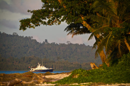 Indo boat trip in the Mentawai Islands