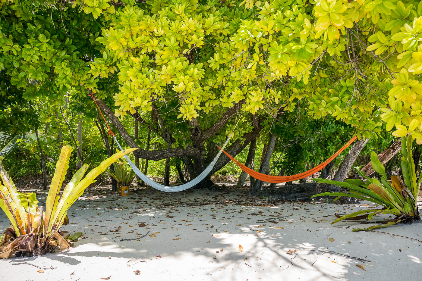 Take a nap on the hammock on the sand in Beran